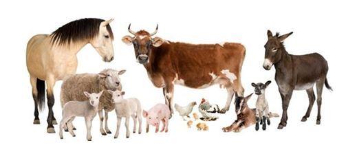 agricultura animale PNDR